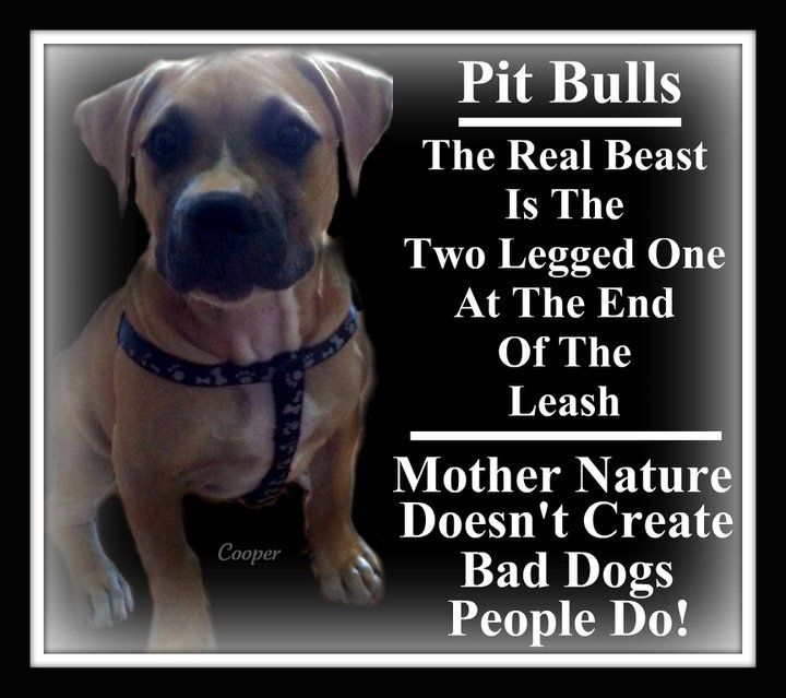 Breed Specific Laws Kill Dogs They Don T Prevent Dog Attacks That