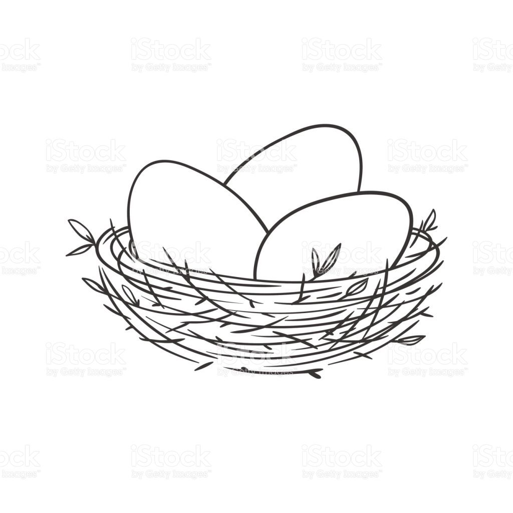 Nest With Eggs Isolated On White Royalty Free Stock Vector