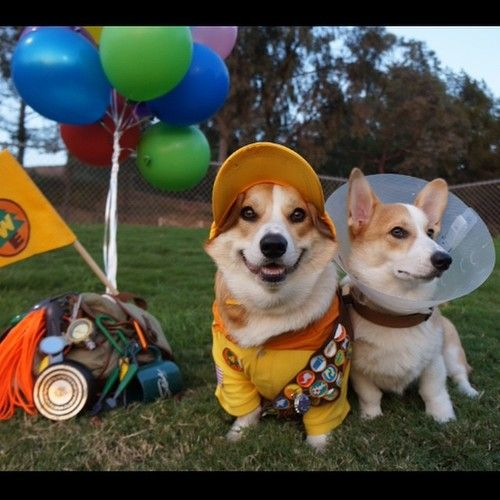 Corgnelius as Russell and Stumphrey as Dug