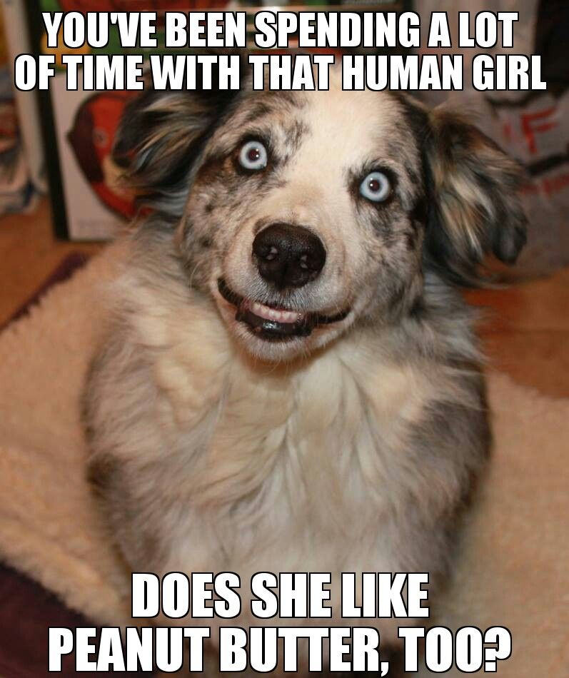 Overly Attached Dog - Imgur