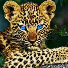 Resultat d'imatges de animales preciosos