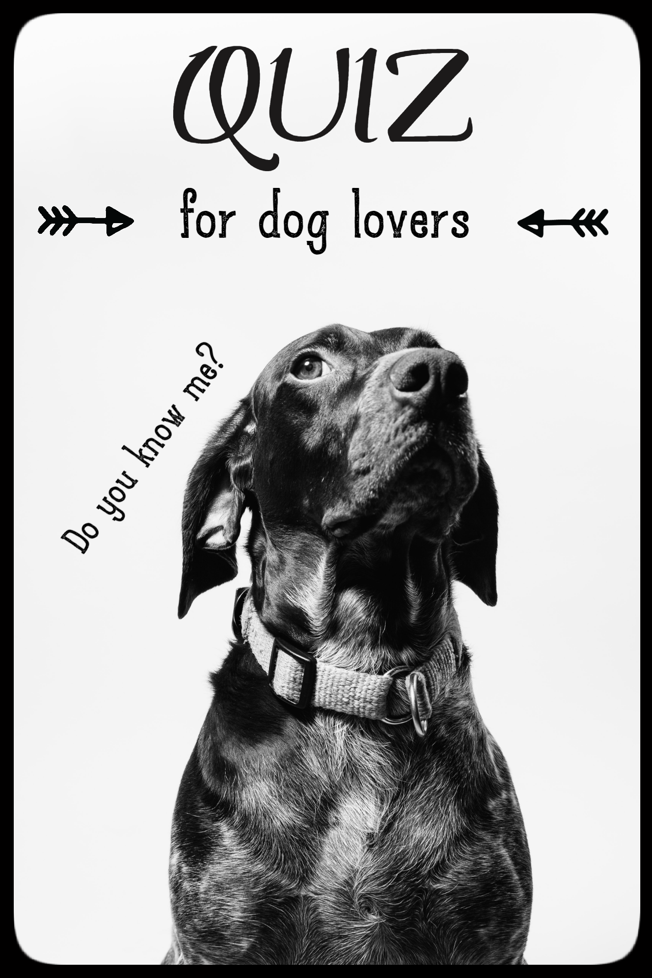 Quiz For Dog Owners True Or False In