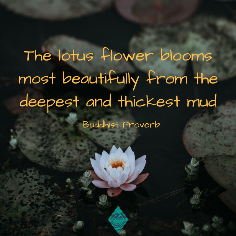The Beautiful Lotus Flower Emerges From Thick Mud Lotus Lilypad