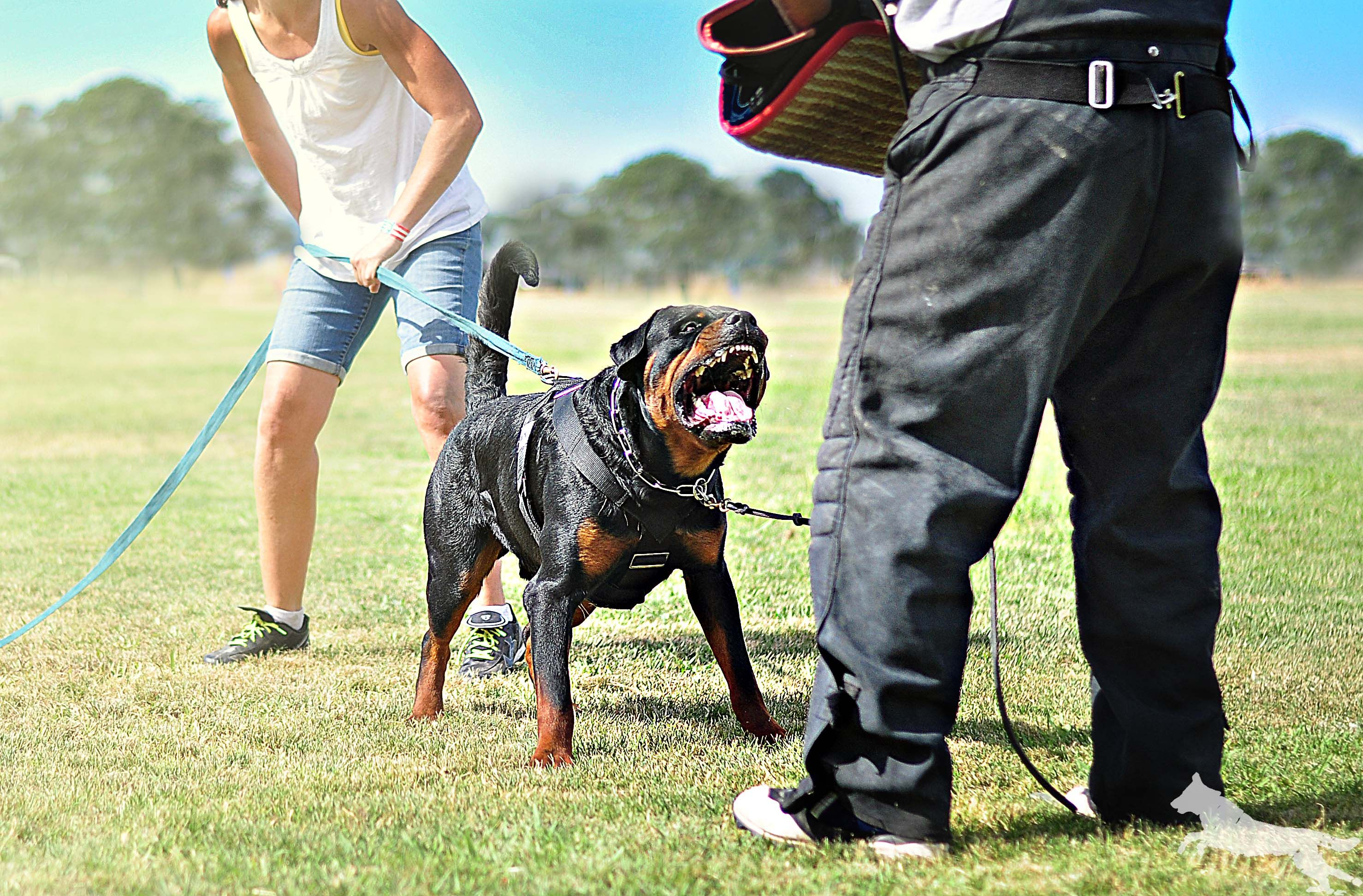 Like Us At Https Www Facebook Com Dogphotographybysilver