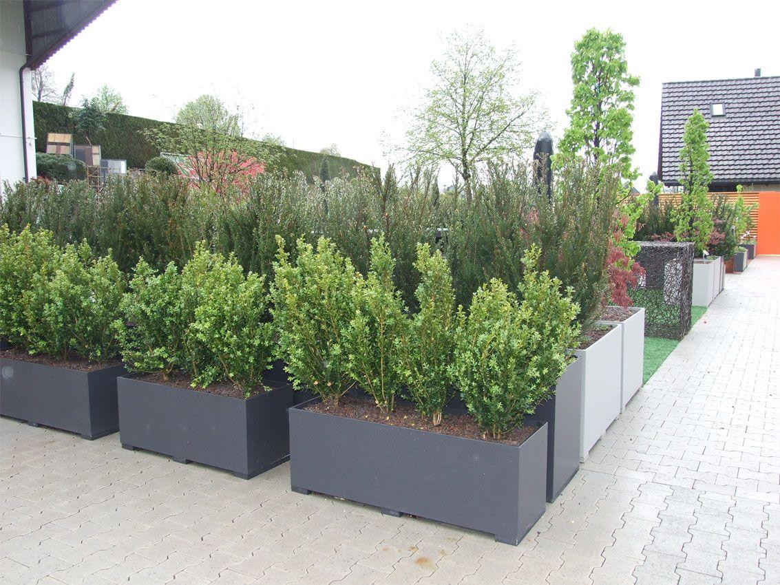 pflanzgefäß faserzement, pflanzkübel viereck xxl | geländer, Gartengerate ideen
