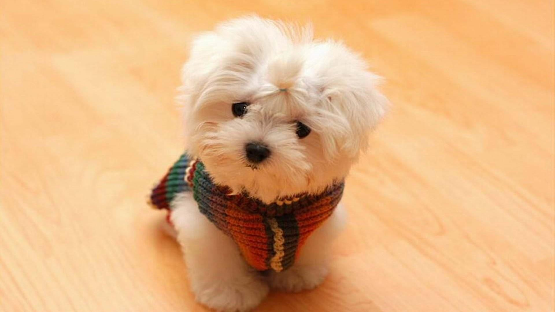 Cute Dog Wallpapers Desktop Mobile 29 Cute Animals Fluffy