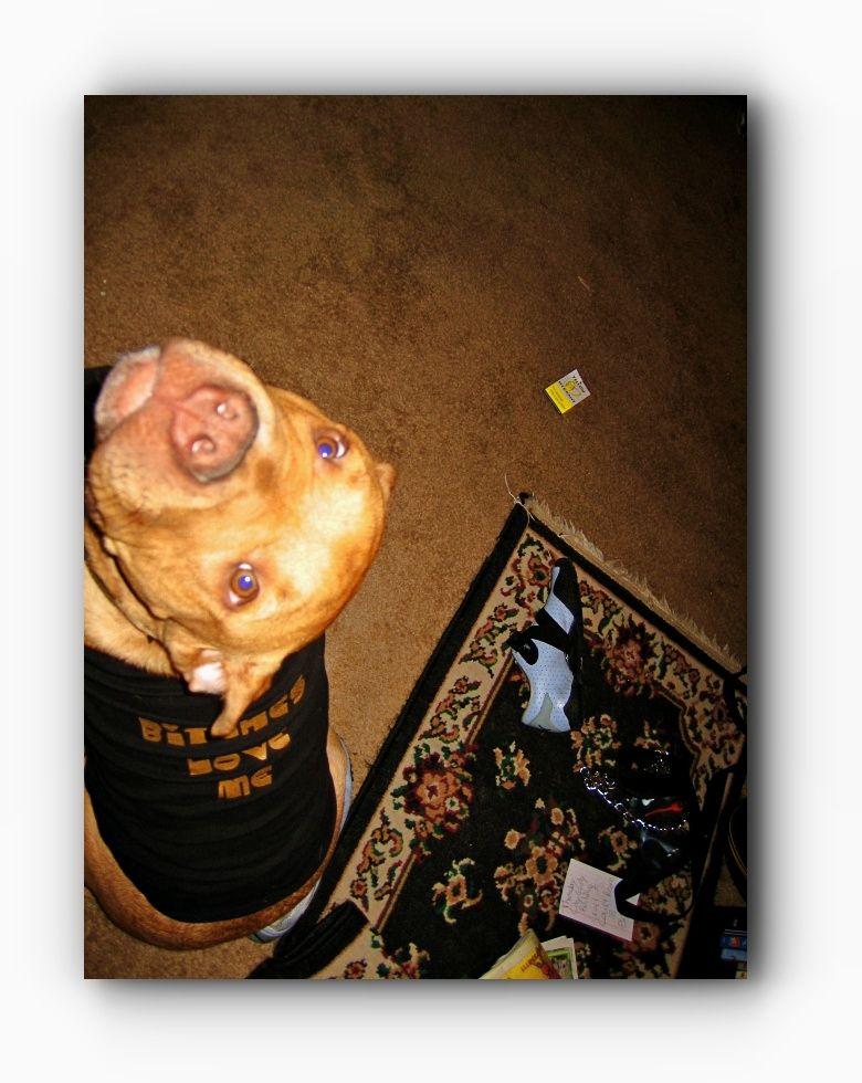 Pitbulls Brindle Pitbulls And Parolees Episodes Wikipedia Click Visit Link For More Details Pitbullsbluenose Pitbullsfunny Pitbullsbrindle