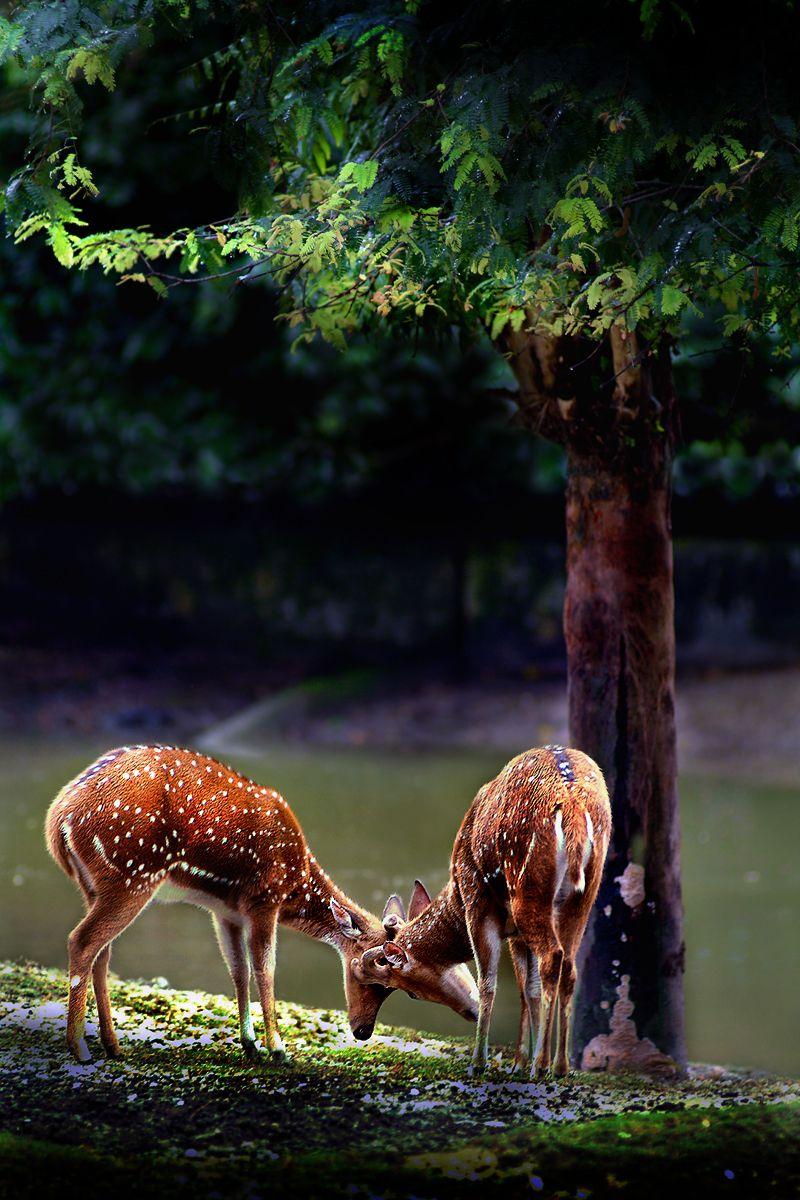 The Brother By Samlim Deviantart Com On Deviantart Nature Animals Animals Wild Animals