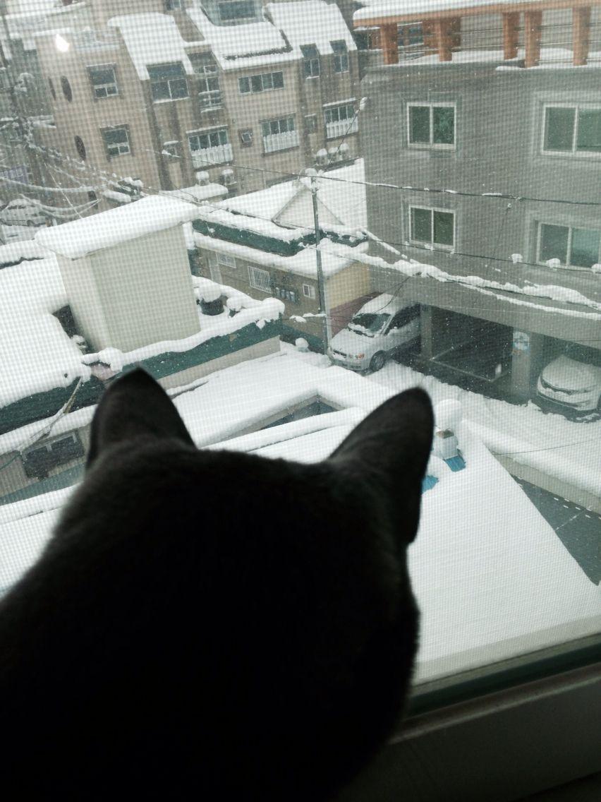 고양이와 눈