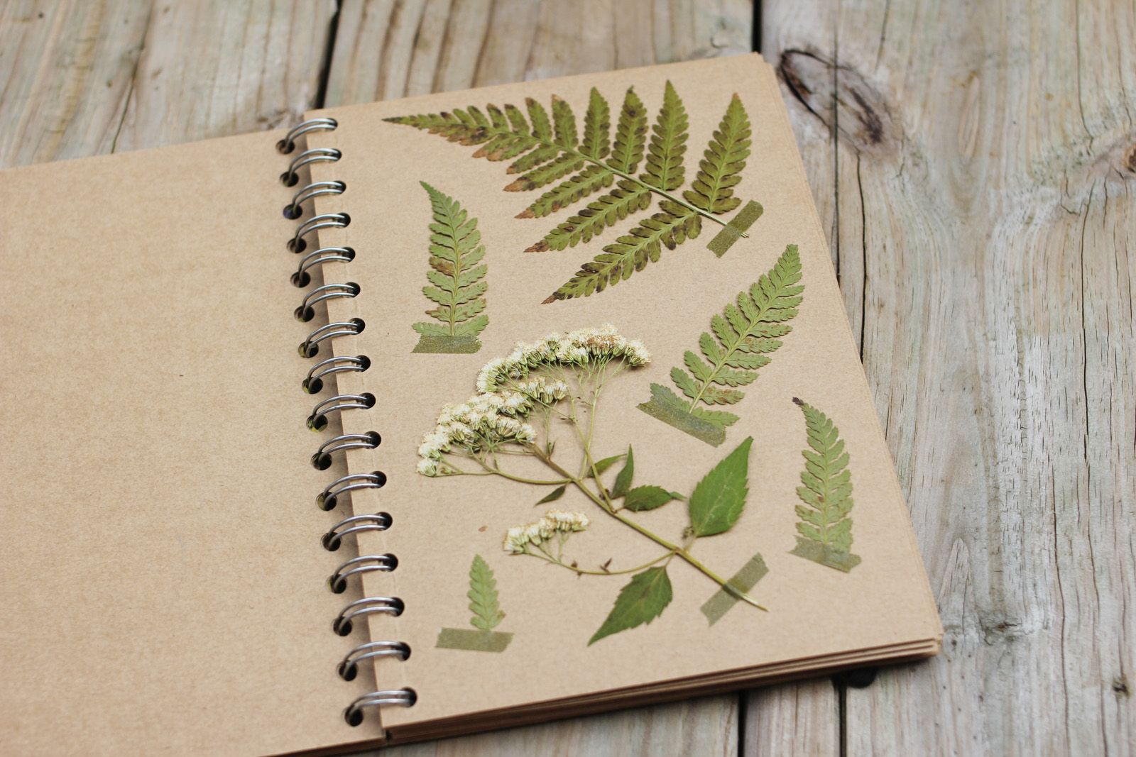 Uncategorized How To Make Pressed Flowers the dainty squid plant pressing tips nature study homeschool i want to start flowers tips