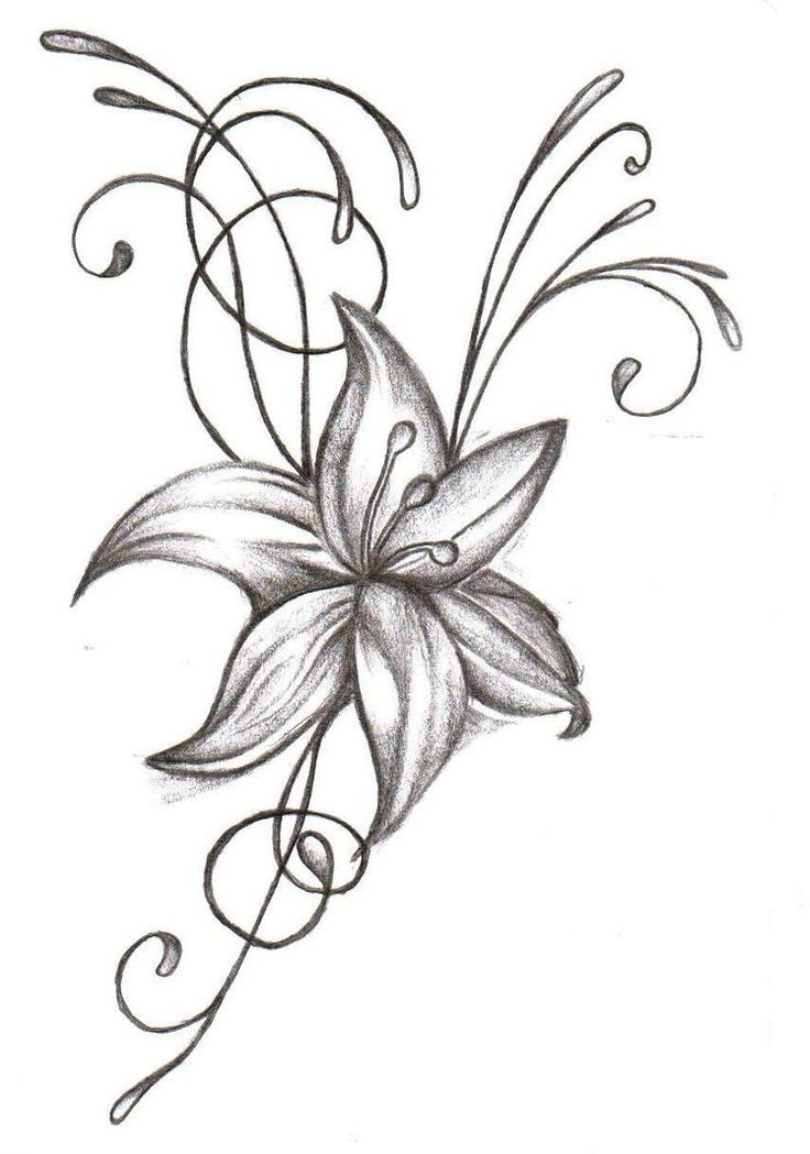 Huge Collection Of Lily Tattoo Drawing Download More Than 40