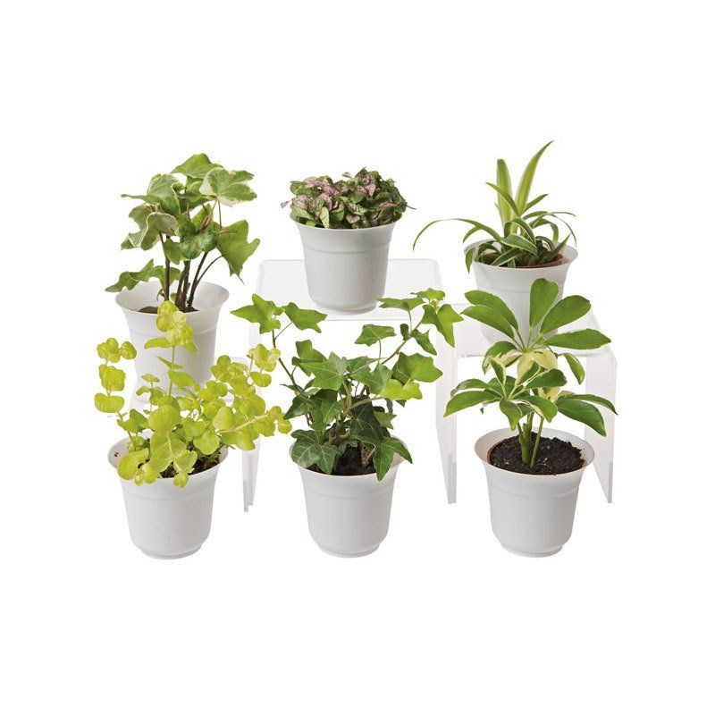 Low Light Terrarium Plant Collection Set Of 6 By Gardener S