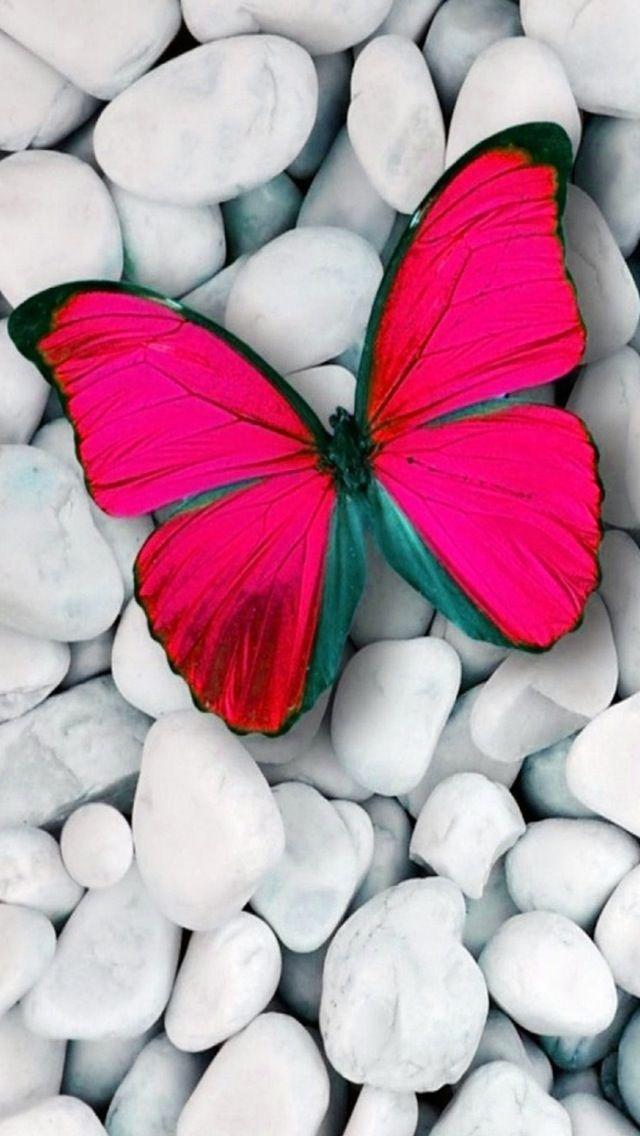 Pink on stones