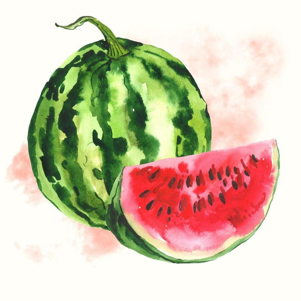 Watercolor Watermelon Background By Depiano Crated Watermelon