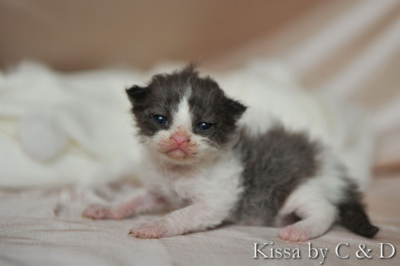 The Tiniest Kitten Cute Animal Photos Cute Animals Cats And Kittens