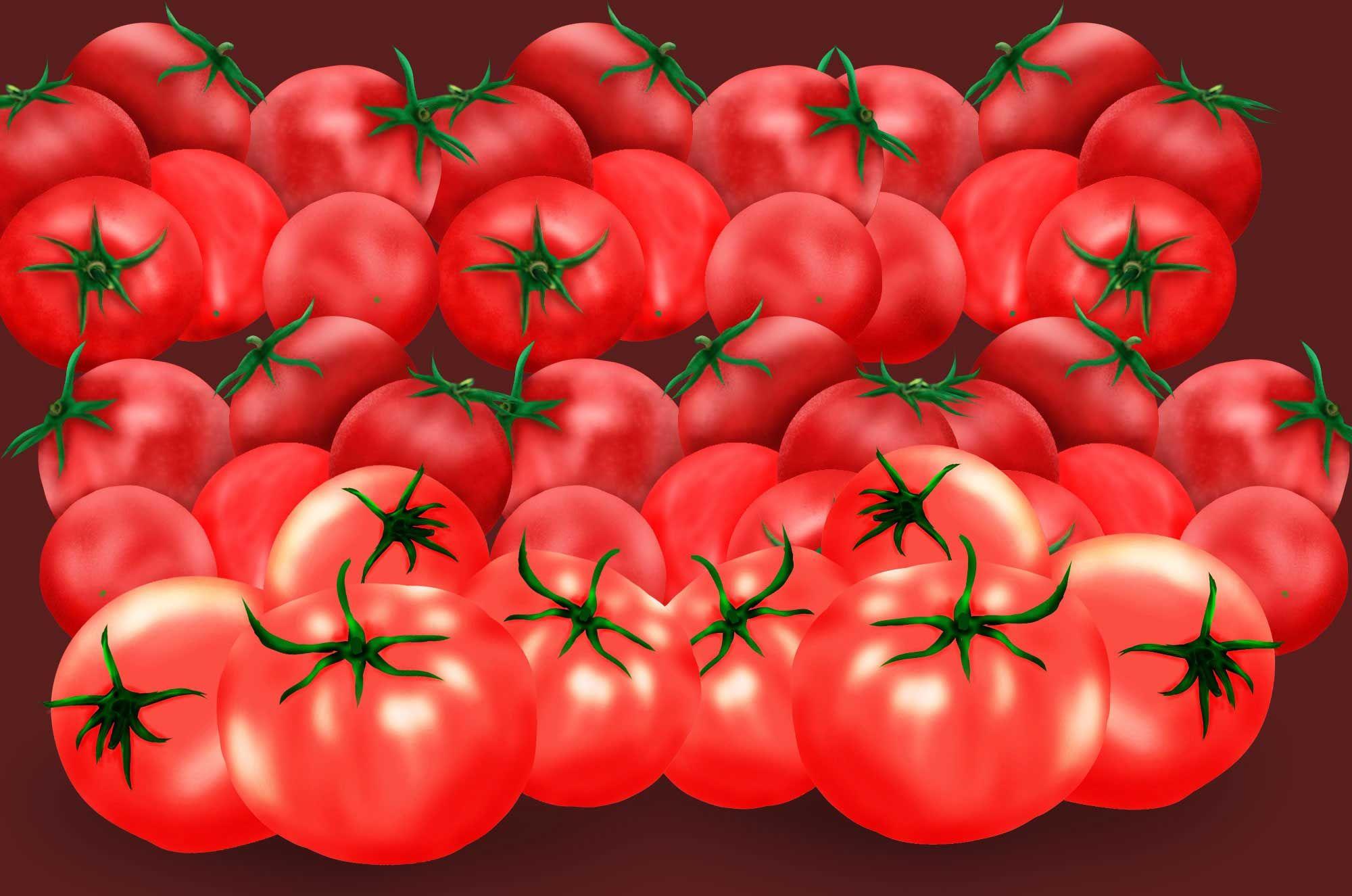 トマトの無料イラスト 手書きのおしゃれな野菜フリー素材 トマトの