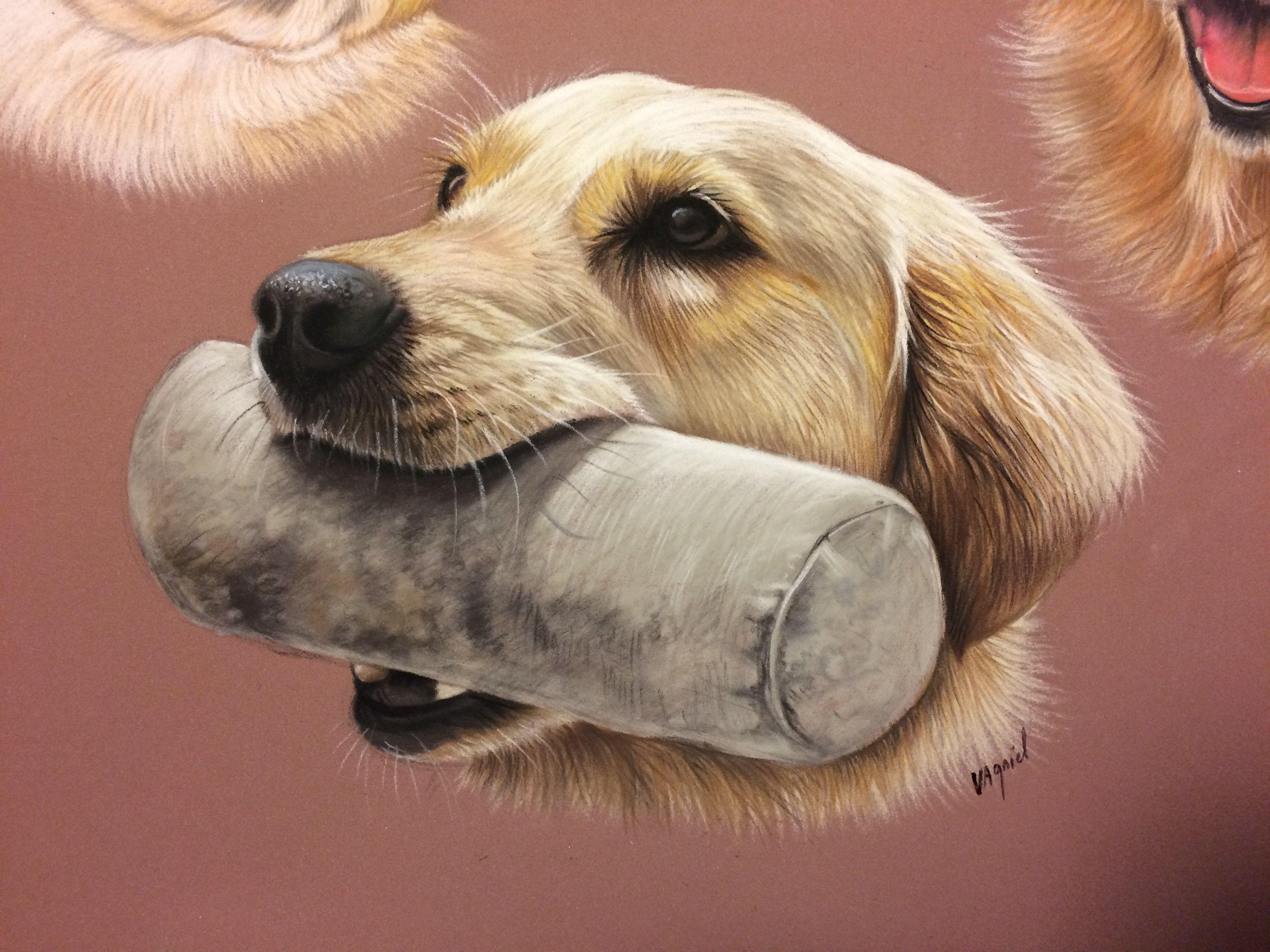 Frais dessin a imprimer chien golden retriever - Dessin golden retriever ...