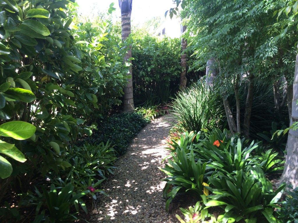 nz tropical garden Google Search Garden Pinterest Tropical