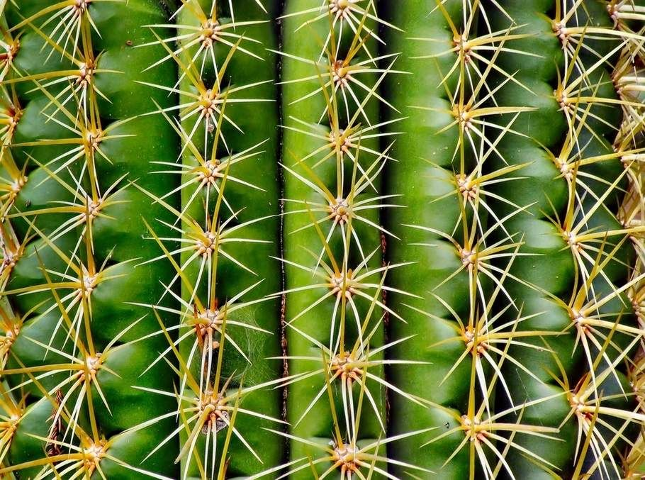 From Shredesign Top 20 Beautiful Examples Of Symmetry In Nature Shre Design Cactus Geometric Nature Geometry In Nature Patterns In Nature