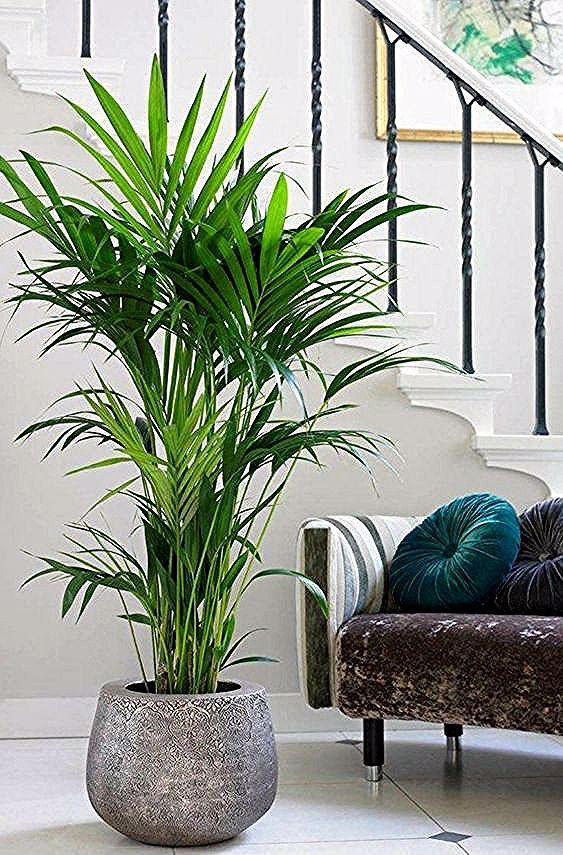 Dekorationsideen für Räume mit großen Pflanzen  #dekorationsideen #pflanzen #raume