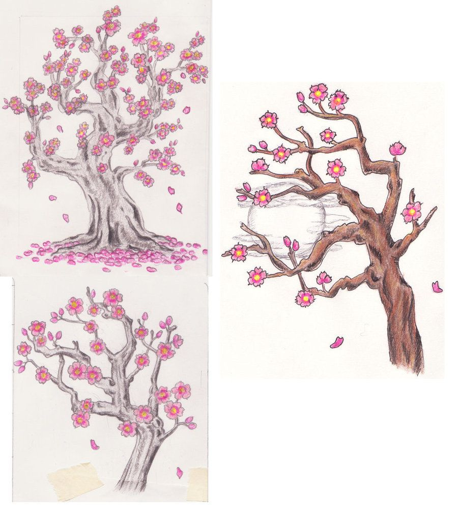 Cherry Blossom Tree Drawing | cherry blossom tree sketches by ...