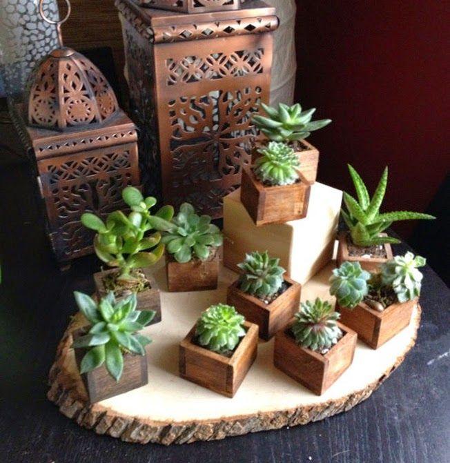 Urbanika moda decorando con cactus y suculentas for Cactus decoracion