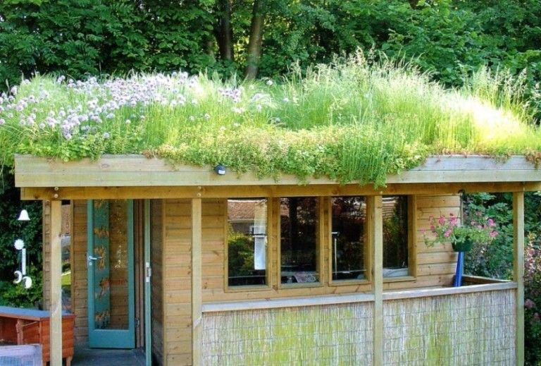 toit vegetalise pour un abri de jardin