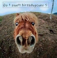 Marion Friedl Blm Endracism On Twitter Funny Happy Birthday Wishes Happy Birthday Pictures Birthday Humor