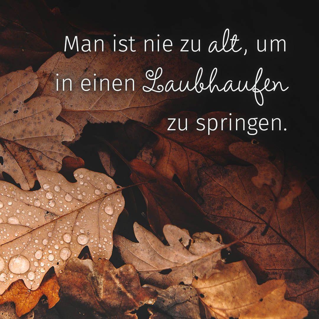 Herbst Spruch Herbst Spruch Spruche Herbst Zitate