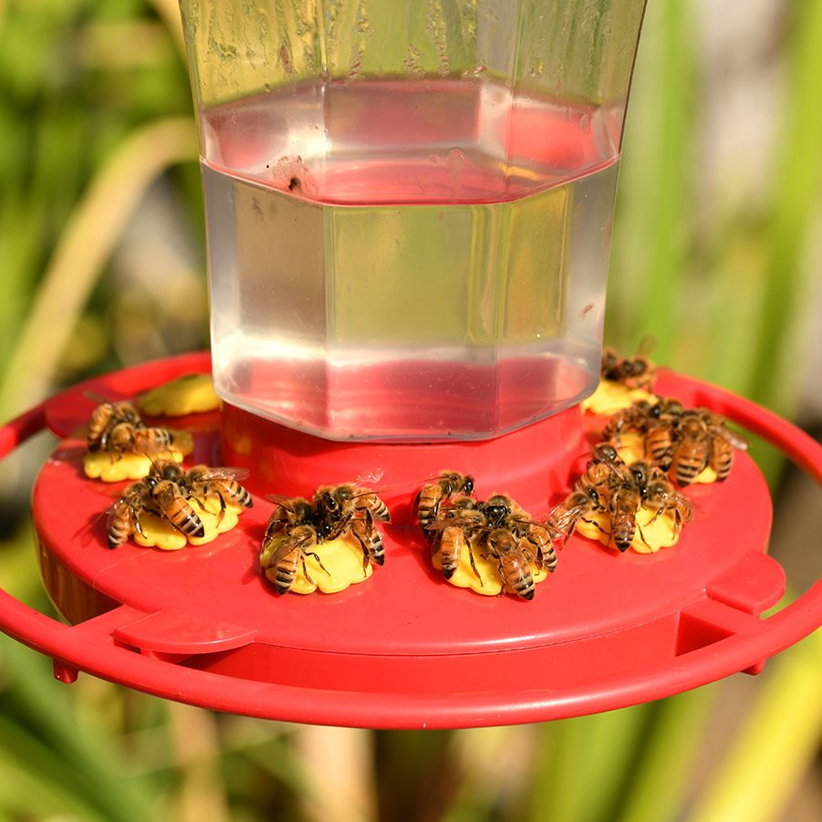 Bee Safe 6 Ways To Keep Bees Away From Your Hummingbird Feeders Everything Birds In 2020 Humming Bird Feeders Keep Bees Away Diy Hummingbird Feeder