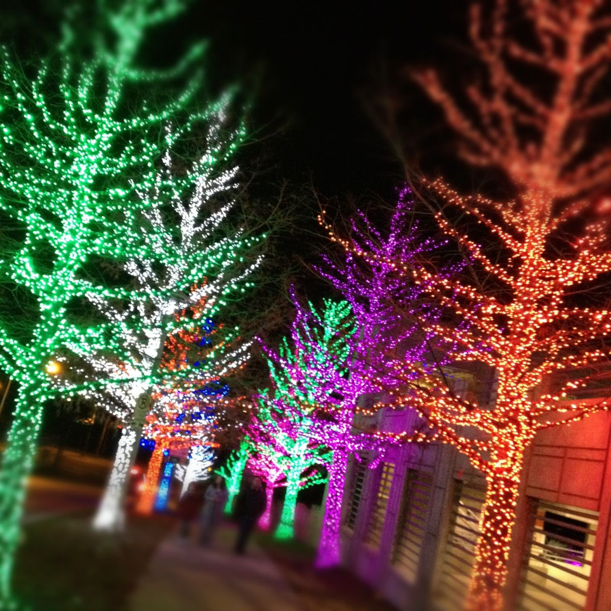 Awesome Christmas Lights in Fort Worth, Texas Christmas
