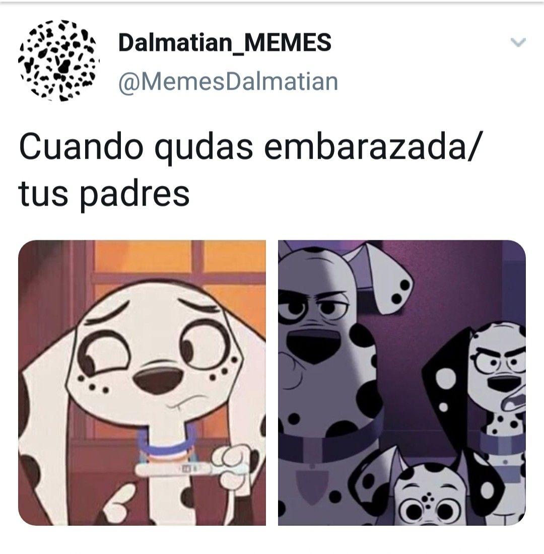 Pin De Dalmata Dalmatian En Memes De Calle Dalmata101 Dalmata Dibujos Bonitos De Animales Memes Divertidos