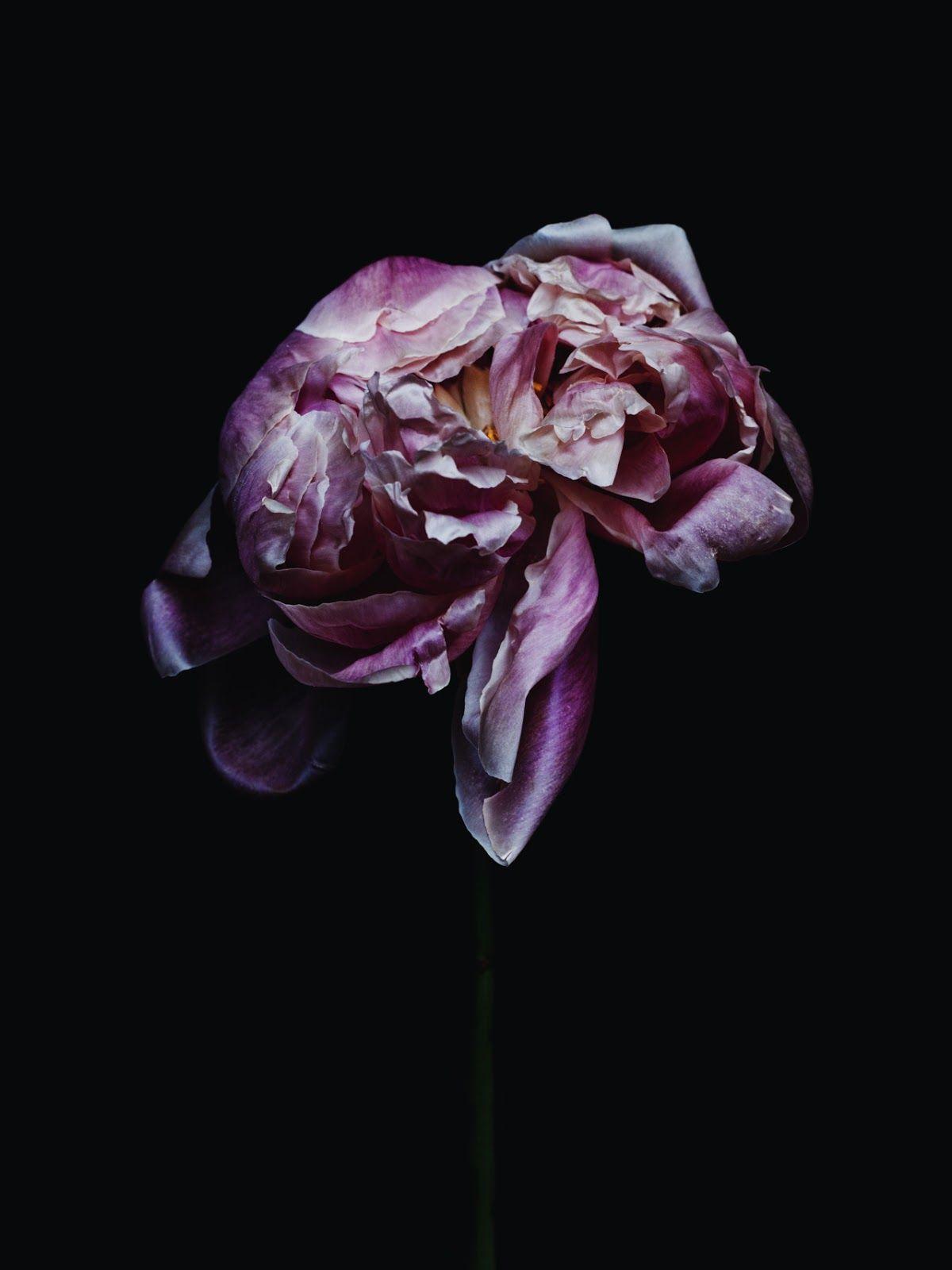 Dead Girl In Love Wallpaper Photo By Billy Kidd Bloem Flowers Dark Flowers