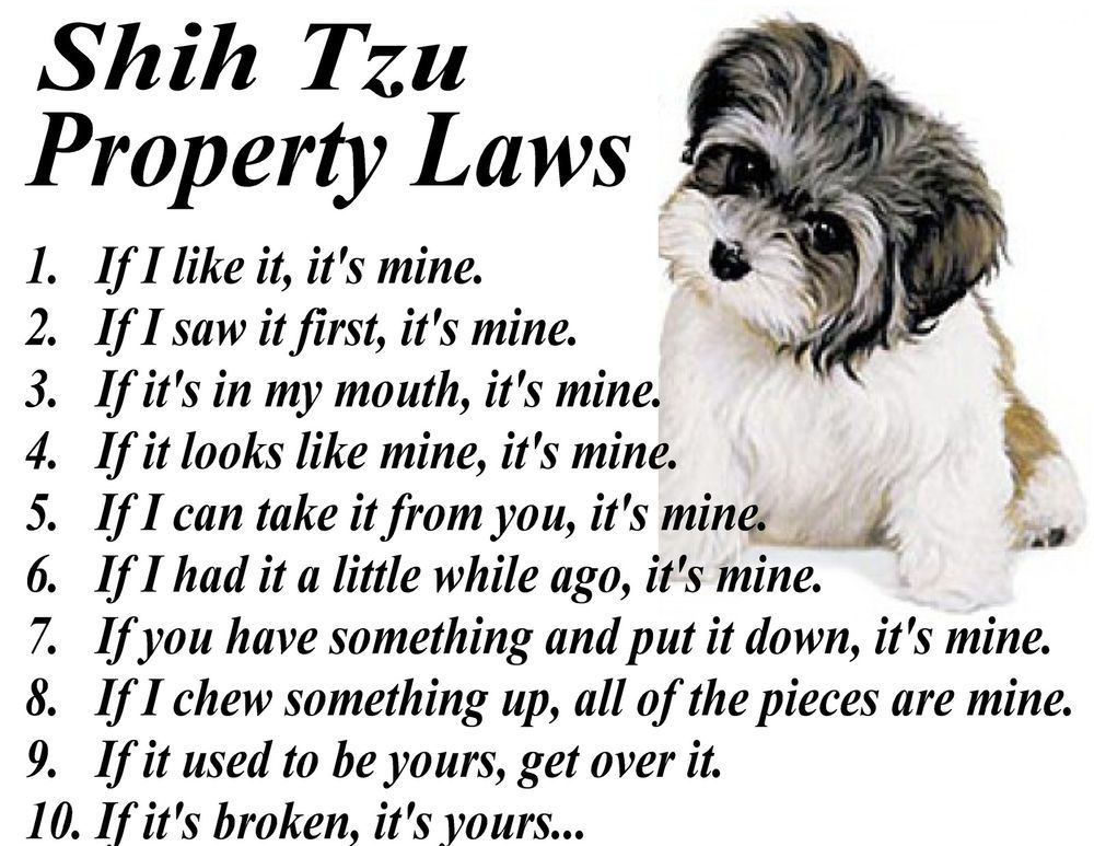 SHIH TZU TOY PROPERTY LAWS FRAMABLE ART PRINT