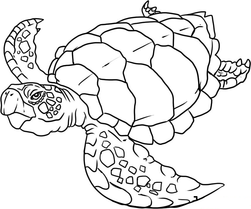 image detail for sea animals coloring pages free printable download coloring pages - Ocean Animals Coloring Pages