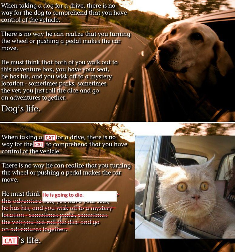 My cats go on a 6-hour car trip at least 8 times a year, and