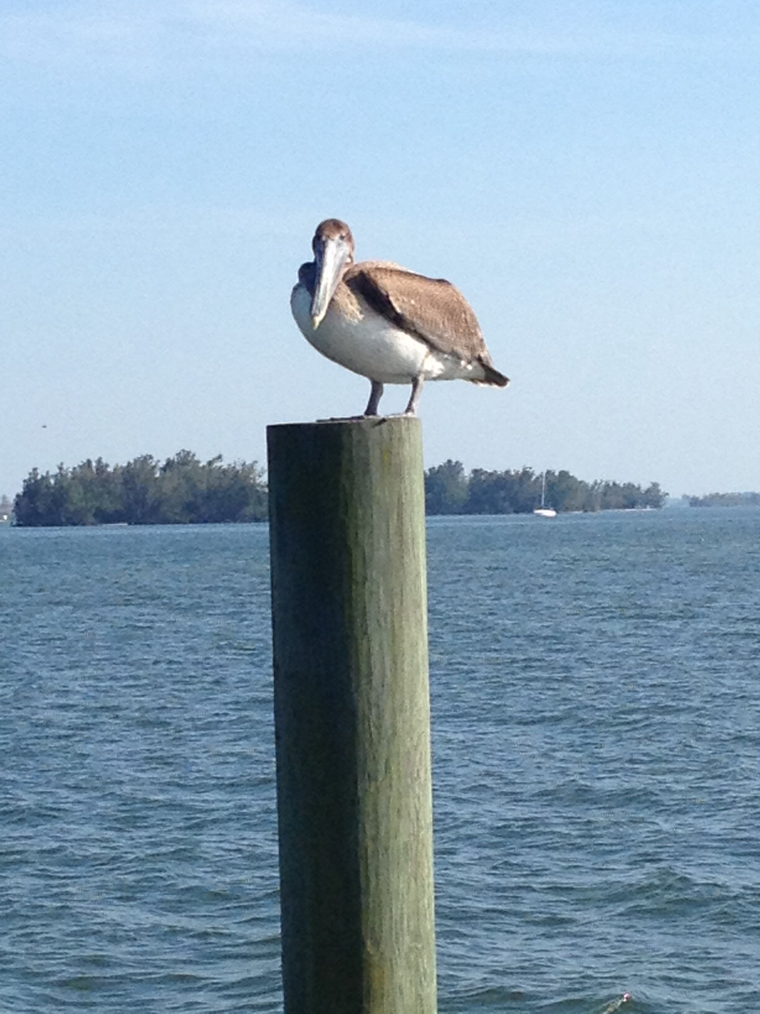 Sitting on the dock!