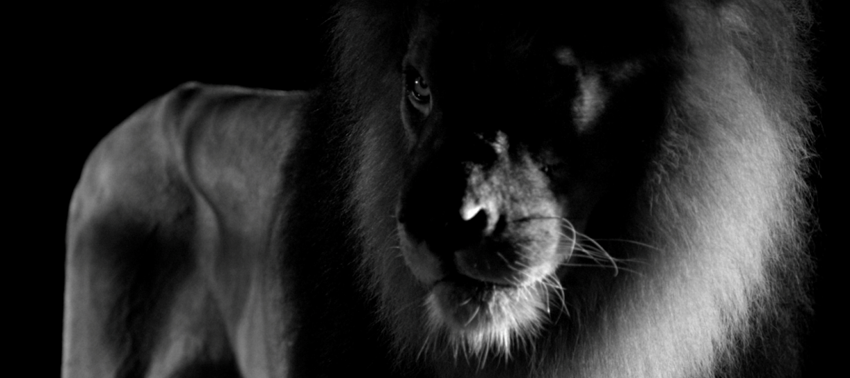 """""""The lion is majestic: one can admire it, fear it, chase it, conquer it (...) The lion is a personality: audacious, instinctive, passionate, radiant. """"I'm a Leo and, like him, I show my claws to protect myself…"""" Mademoiselle declared, """"… but believe me I suffer more by clawing than being clawed""""...  #CHANEL"""