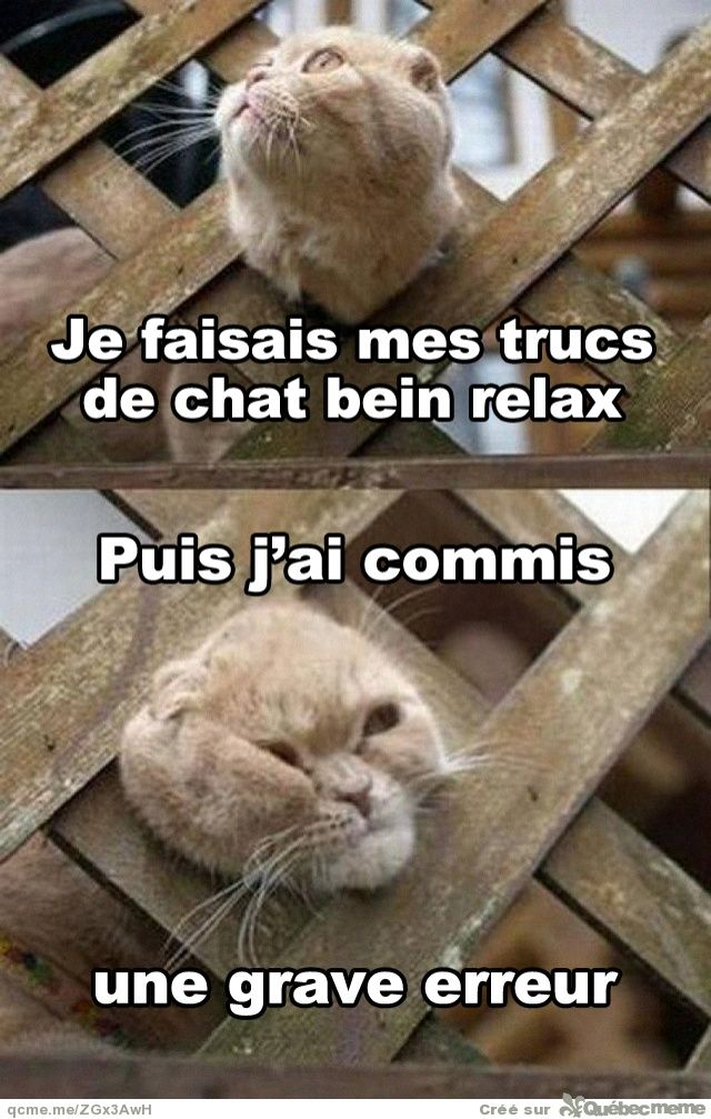 Videos, Images, Drole, Humour, Insolite, Sexy  Bu2z