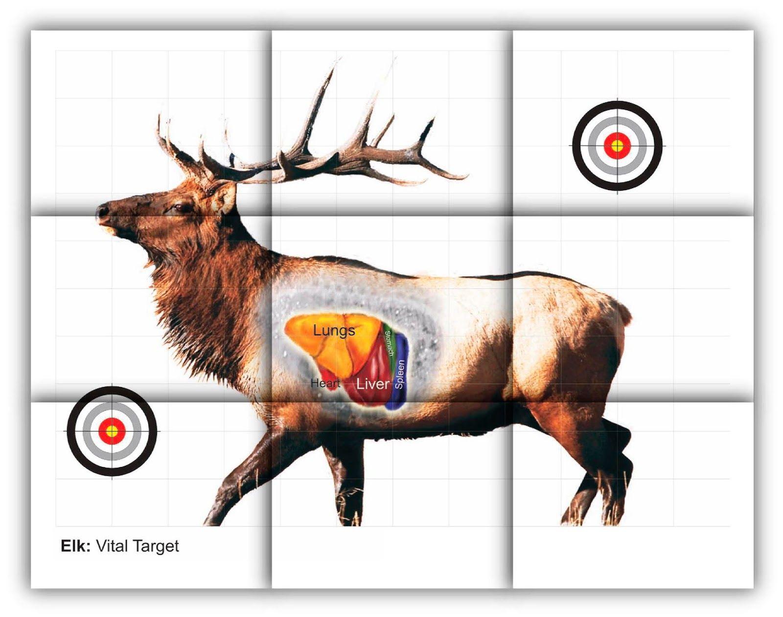 Whitetail Deer Vital Area Diagram 4 Pole Trailer Wiring Elk Vitals Target Free Printable Shooting Targets