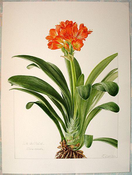 Pin de Patricia Buitrago en BOTANICA | Pinterest | Botánica ...