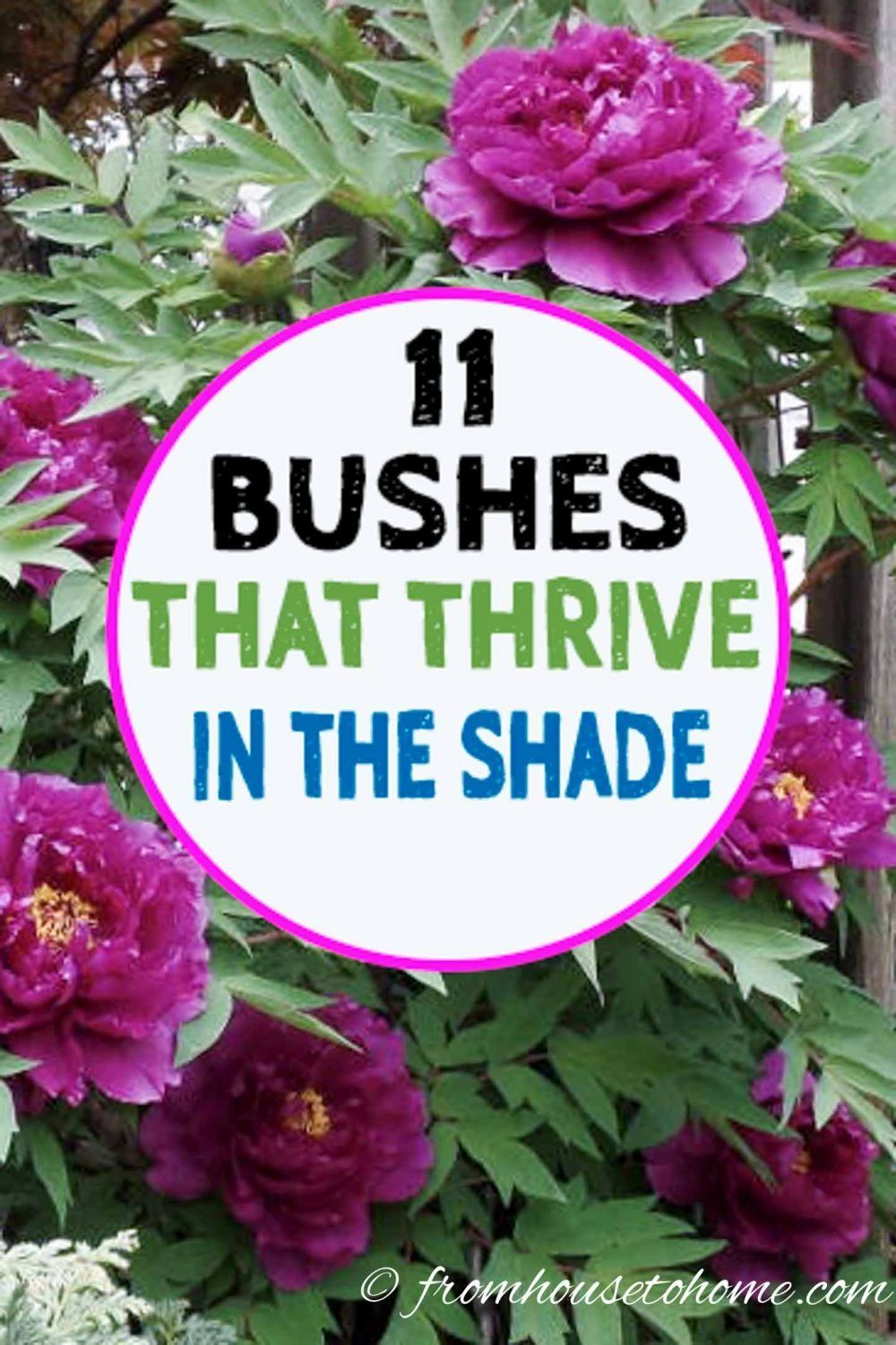 Shade Loving Shrubs: 15 Beautiful Bushes To Plant Under Trees - Gardening @ From House To Home