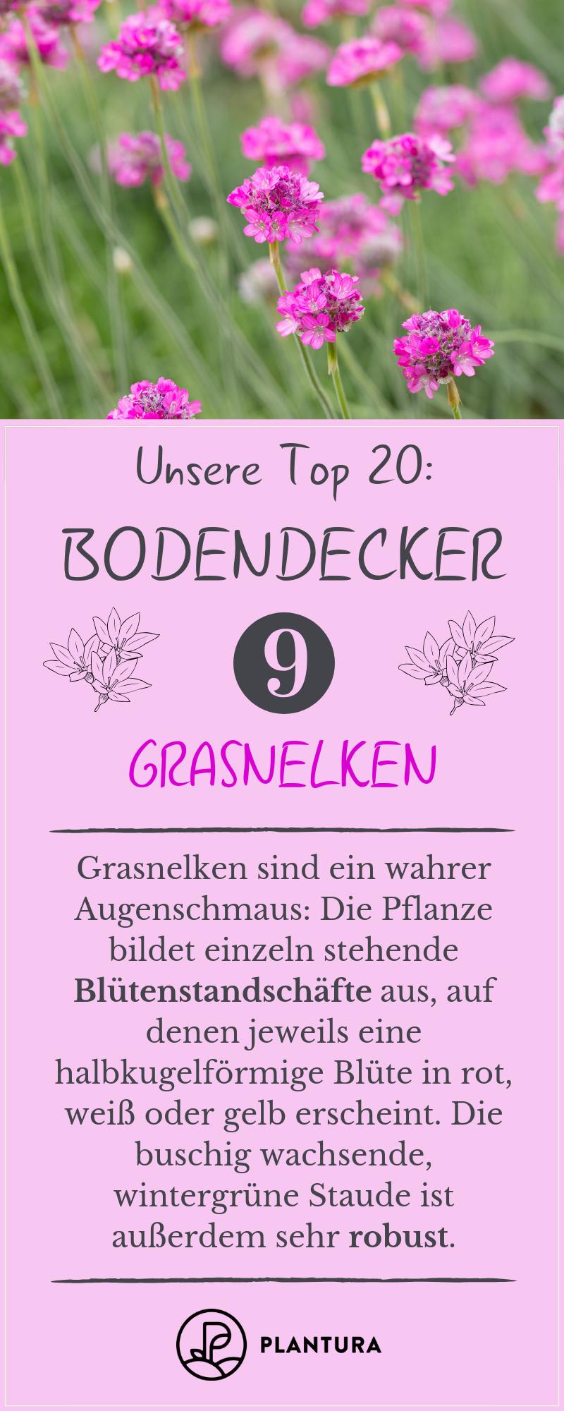 Bodendecker: Die 20 Schönsten für eine einfache Gartengestaltung #kräutergartendesign