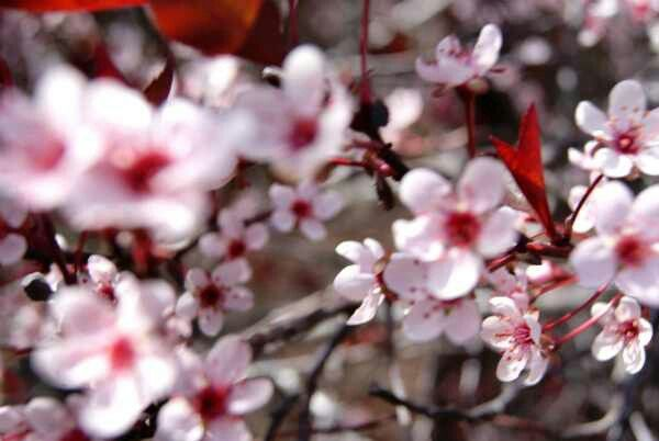 Pin By Catherine Lombardo On Beauty In Nature Spring Tree Bloom Beautiful Flowers