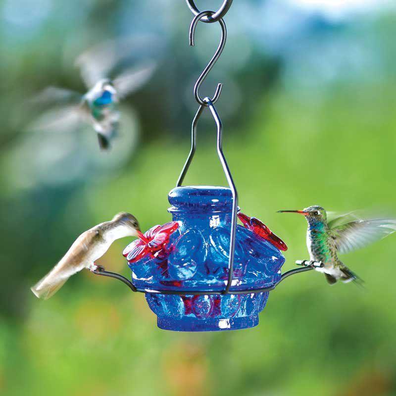cute hummingbird feeder Humming bird feeders, Glass