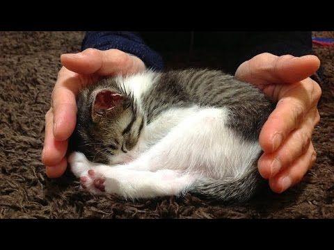 仔猫の想い出「♀猫こむぎ」;猫おもしろ動画こむぎ&だいず