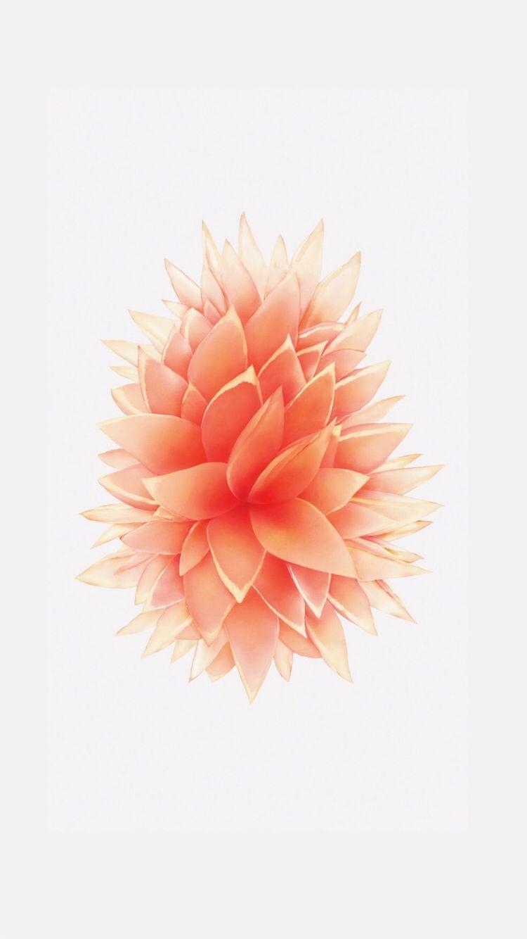 iphone 5se wallpaper rose gold a pinterest. Black Bedroom Furniture Sets. Home Design Ideas