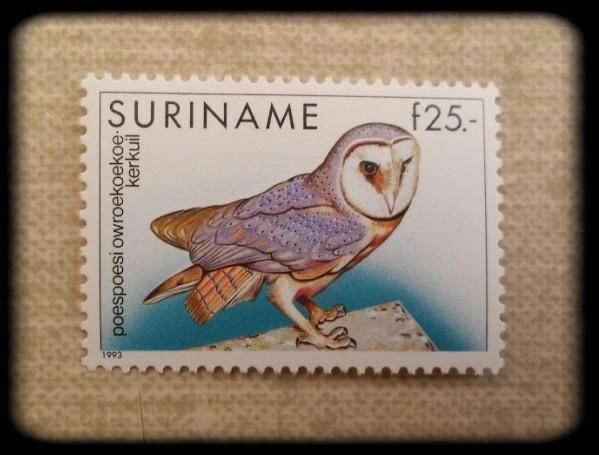 006 Barnowl postagestamp, Suriname. Stamp collecting, Paper
