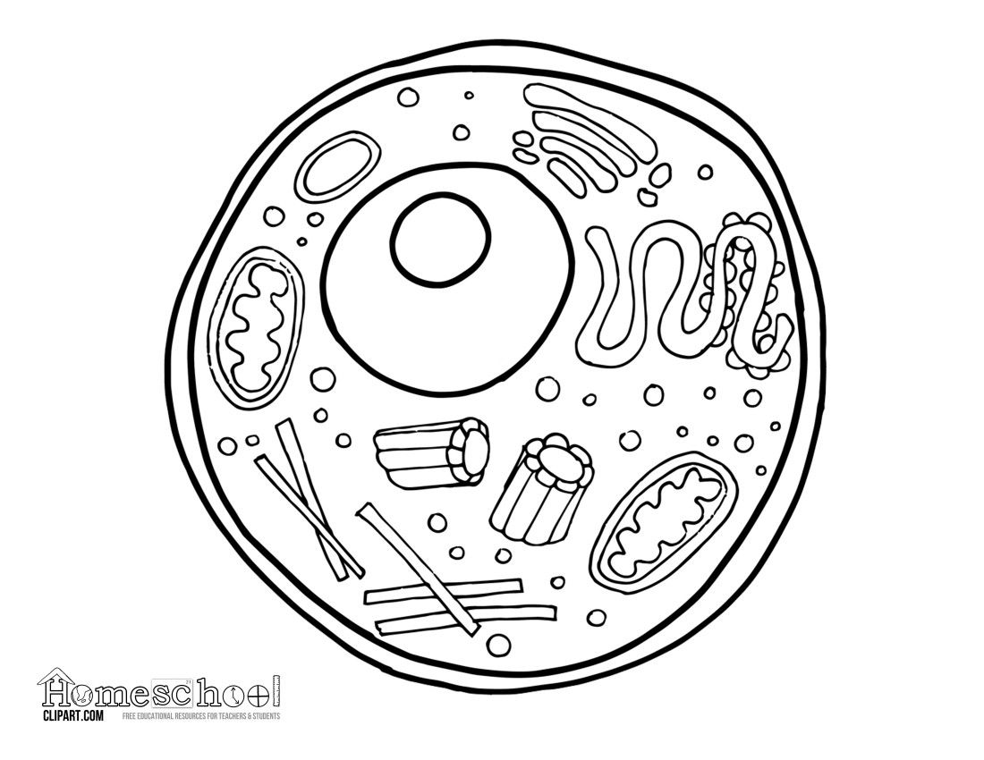 Coloring Pages For Collage Project Image By Mecosta