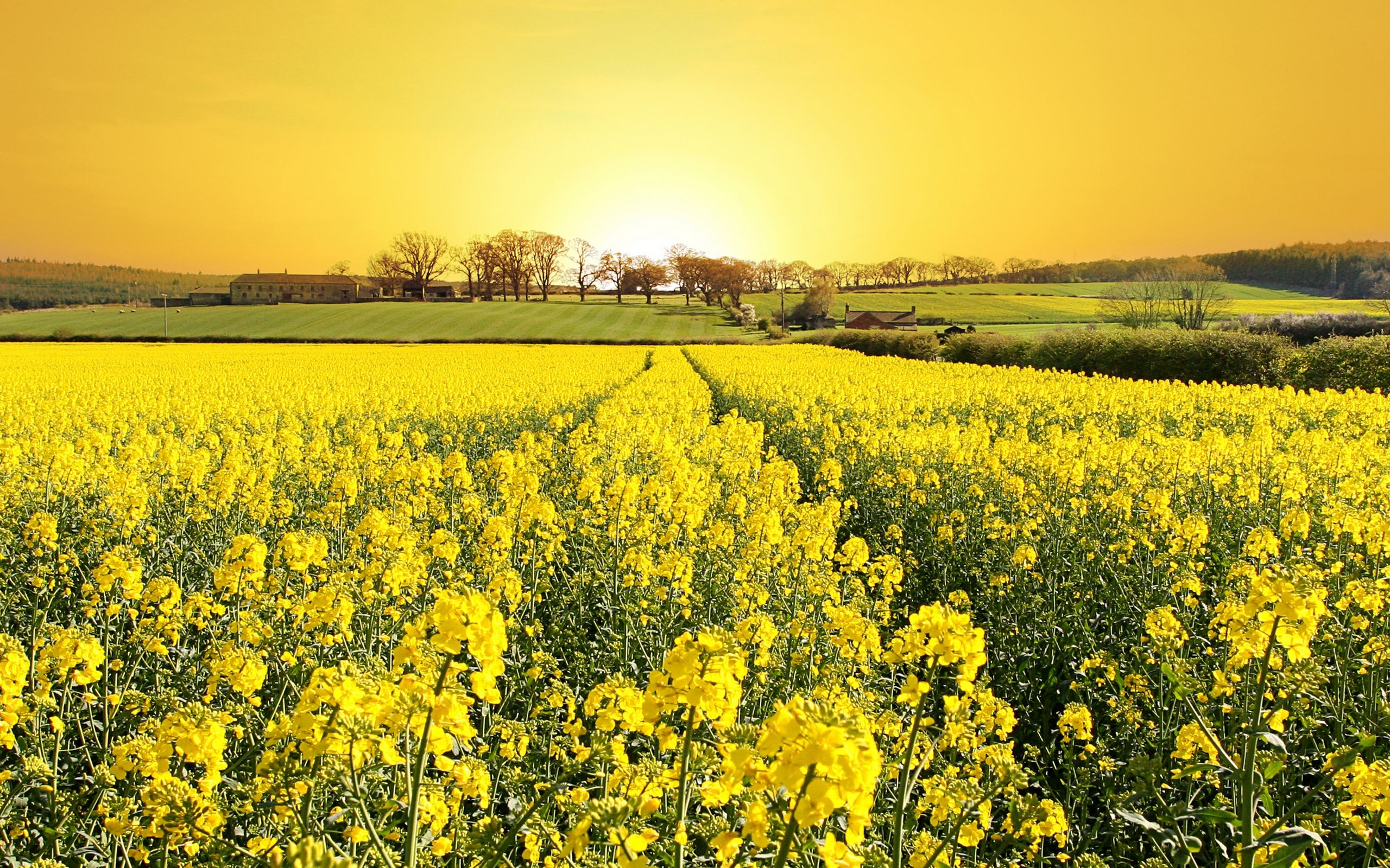 Yellow Field Field Flowers Grass House Landscape Nature Trees
